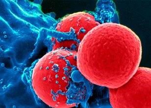 Anticorpos Recepta: testes clínicos de Fase II (tumores de ovário e mama), geração de linhagens celulares e testes clínicos I e II.